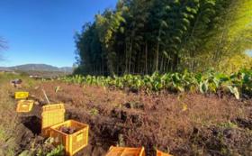 八風農園1日収穫体験「青空ランチ付き」コース