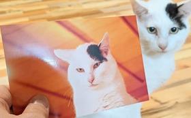 3000円で応援。ポストカードコース+猫カフェチケット