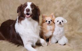 F|写真家兼本玲二による愛犬・愛猫・もしくは支援者ご本人のポートレイト撮影体験(予約制、東京・大阪会場も有り)