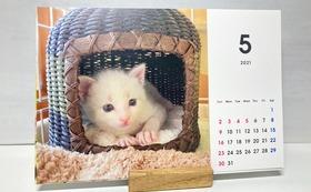 お礼のメールと「猫のしらす」カレンダー