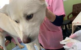 【佐賀県に動物の救急病院を!】HPにお名前掲載(希望制)  5万円