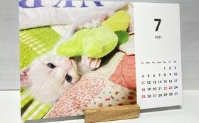 「猫のしらす」卓上カレンダー