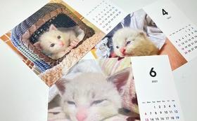 お礼のメールと「猫のしらす」卓上カレンダー(2個入)