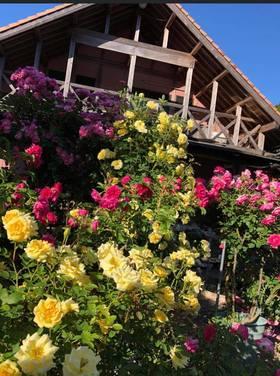 『自慢のお庭でまったり貸し切り朝食』 〜バラの季節〜