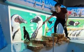 沖縄でペンギンの水槽掃除体験!