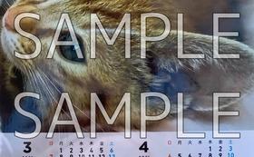 ポストカード+ボールペン+カレンダー