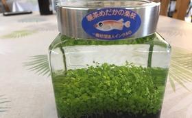 感謝メール・早川地域住民交流館にお名前掲示・ボトルリウム育成キット