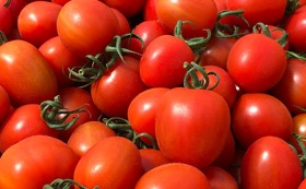 【産地直送!】くまさん農園 ミニトマト