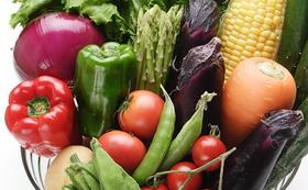 「旬の練馬野菜の詰め合わせ」夏野菜と秋野菜