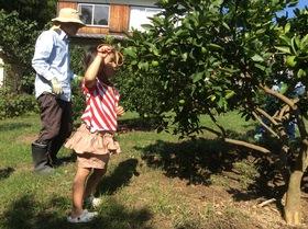 家賃0円ハウスにあなたの好きな果樹の木を