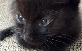 リターン不要。3000円すべて猫の保護活動に使わせて下さい!