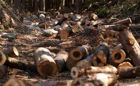 みなさまの「お名前(法人名/個人名可)」を「備蓄木ステーション」に掲載します!【サイズXS】