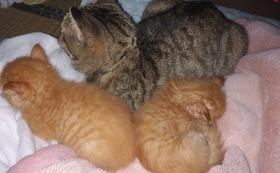 リターン不要。10000円全て猫の保護活動に使わせて下さい!