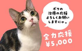 保護猫太郎を全力応援コース5000円