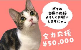 保護猫太郎を全力応援コース50,000円