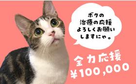 保護猫太郎を全力応援コース100,000円