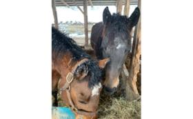 【3千円】肥育場から1頭でも多く馬を救い出すために。全力応援コース