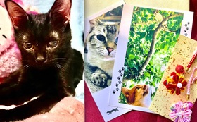 (50,000円)保護仔猫医療費治療費応援Bコース