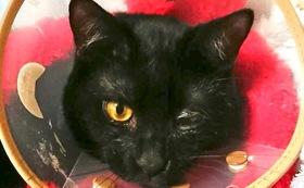 (100,000円)保護仔猫医療費治療費応援Aコース
