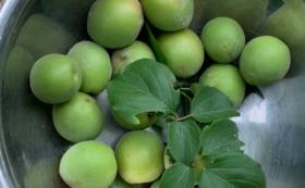 お庭の梅の収穫体験コース