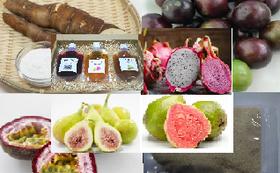 トロピカルフルーツ5種類と加工品、キャッサバ芋(45,000円相当)2回