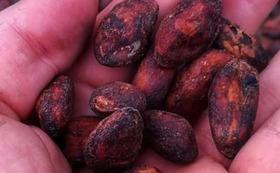 カカオニブ(チョコの原料、高ポリフェノールのスーパーフードとして人気。ヨーグルトやアイスクリームなどにふりかけて!)