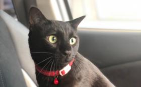 『5,000円』幸せの猫ハウスニャーズ応援コース