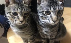 『50,000円』幸せの猫ハウスニャーズ応援コース