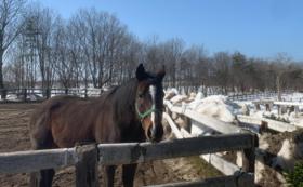 【預託馬を所有されている方向け】引退預託馬の預託権1年分コース