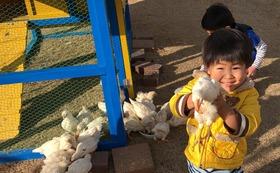 \7番/限定30名!ひよこちゃんの名前を命名し、成長を見守りながらニワトリに育てた後、産みたての卵が送られる権利