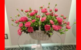 「パンの花(メンデルスゾーンのバラ)の年間レンタル契約」(約50㎝×80㎝×高さ40㎝)(レンタル期間1年間)
