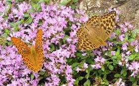 【3万円:応援コース】チョウを守り、自然を守る。