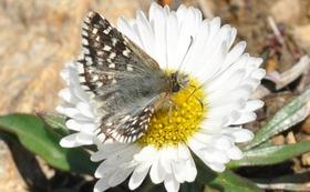 【10万円:応援コース】チョウを守り、自然を守る。