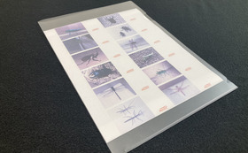 特製昆虫写真印刷紙付きクリアファイル1枚