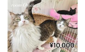 【1万円コース】LYSTA10年目の挑戦を応援!