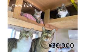 【3万円コース】LYSTA10年目の挑戦を応援!