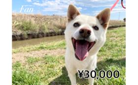 【3万円コース】いずれか1種類 体験チケットコース