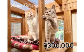 【30万円コース】LYSTA10年目の挑戦を応援!