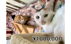 【100万円コース】シェルター・ohana・LYSTA関連施設をご案内