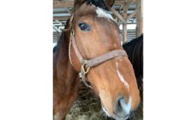 【1万円】肥育場から1頭でも多く馬を救い出すために。全力応援コース