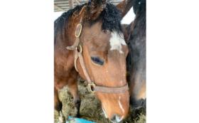 【3万円】肥育場から1頭でも多く馬を救い出すために。全力応援コース