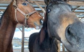 【5万円】肥育場から1頭でも多く馬を救い出すために。全力応援コース