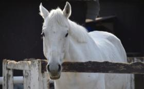 【10万円】肥育場から1頭でも多く馬を救い出すために。全力応援コース