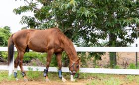 【3万円】救い出した馬に会いに行こう。引退馬の森見学会&ネーミングボードにお名前掲出コース