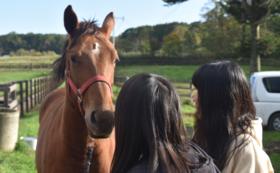 【5万円】保護した馬と一緒に過ごす時間をプレゼント。日帰り見学会&1日お世話体験コース