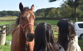 【10万円】保護した馬と一緒に過ごす時間をさらにプレゼント。日帰り見学会&1日お世話体験3回分コース