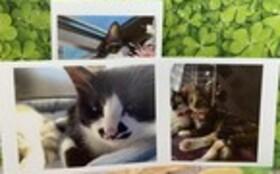 お礼のお手紙・メッセージカード(3枚組)・卓上カレンダー・『保護猫カフェあんちゃん』新聞