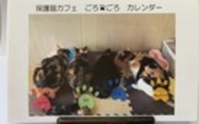 お礼のお手紙・卓上カレンダー・ねこプリント巾着(小)・『保護猫カフェあんちゃん』新聞