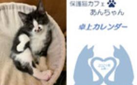 お礼のお手紙・メッセージカード(3枚組)・卓上カレンダー・エコバッグ・『保護猫あんちゃん』新聞