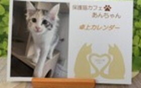 お礼のお手紙・ねこグッズ5点セット・『保護猫カフェあんちゃん』新聞